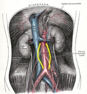 Preserving Residual Renal Function