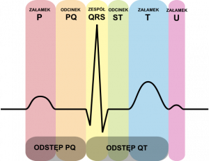 From The Archives – EKG Websites: A Review of the Most Viewed Websites