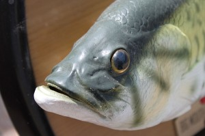 Myths and Realities: The Fishy Truth about Mercury Toxicity