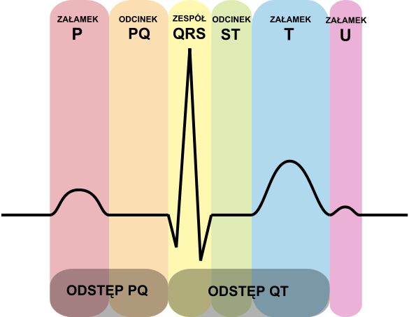 EKG Websites: A Review of the Most Viewed Websites